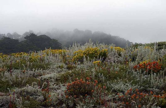 Point Lobos fog