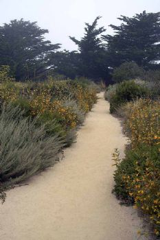 Point Lobos trail